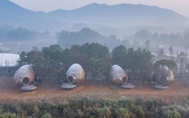 种子木屋:中国森林里的瓦面豆荚